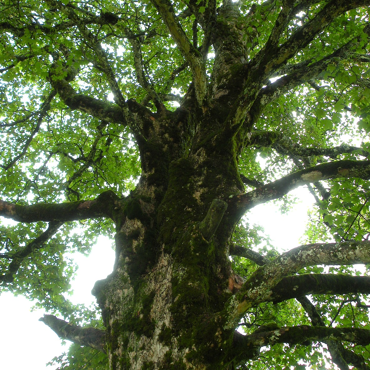 Pflanzen und Bäume
